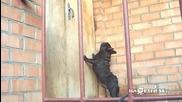 Малко куче със странно лаене!