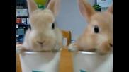 2 изключително сладки зайчета