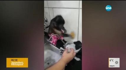 Маймунка чисти старателно баня