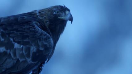 Първата зима на златна орлица | NG Wild Bulgaria