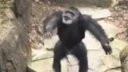 Маймуна уцели баба в лицето вижте с какво