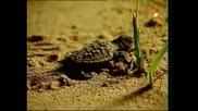 Енциклопедия на животните - Морска костенурка