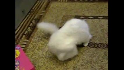Сладки котенца си играят