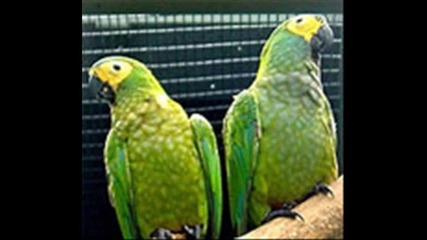 Най - красивите птици на света