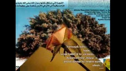 hoshgeldinn 11 Ayin Sultaniiii