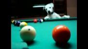 Куче показва уменията си