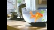Котка уплашена от риба
