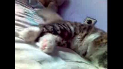Котенцето Ми