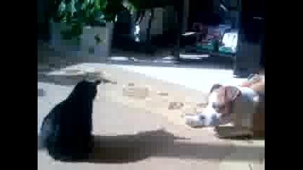 Куче Си Играе С Котка