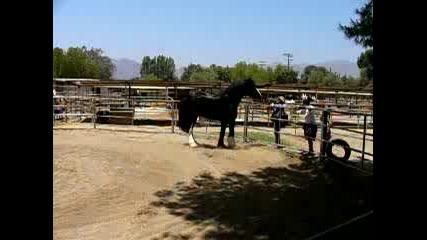 Най - големия кон в света
