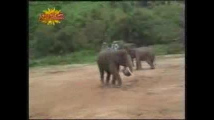 Слон Футболист