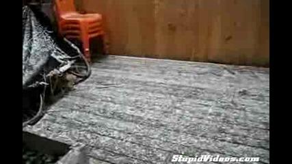 Сладки котета си лудеят на снега !