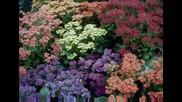 Псалми И Еклисиаст - Secret garden