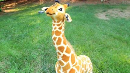 Жирафа мрази Джъстин Бийбър