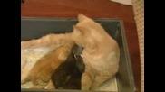 Котка Приютява Зайче