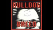 Bulldog Breed - Unity is Victory