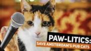 Правителството срещу котките от баровете в Амстердам