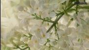 Цветя - музика Jean Claude Borelly