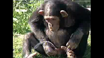Маймунка Прави Пиш и Пие