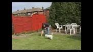 Dog Kick - 334943