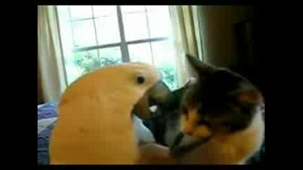 Папагал Мърсува С Котка
