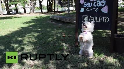 В Бразилия създадоха сладолед за кучета