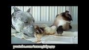семейство куче котка пилета