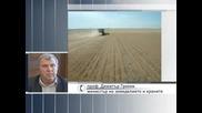 Няма опасност от зърнена криза
