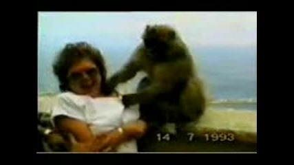 Маймуна Пръска С Вода