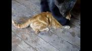 Малко мече се закача с коте