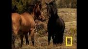 Дивите коне