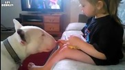 Сладко момиченце храни куче..