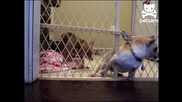 Бягство от затвора за кучета !