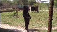 Забавен мечок ходи като човек