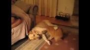 Куче И Коте Си Играят