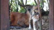 Котка И Антипола Се Обичат