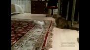Върти , върти... въртележка - Спиди Гонзалес в кучешки вариант
