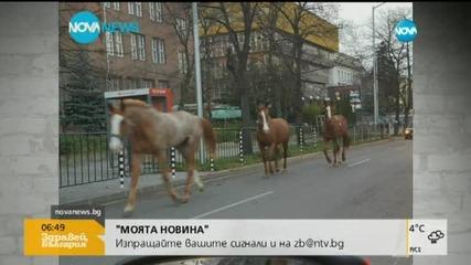 """В """"Моята новина"""": Коне по бул. """"Драган Цанков"""""""