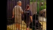 Скрита камера с горила