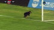 Четириног симпатяга спря футбола в Каварна