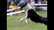 Супер Яко - Кучета на забавен кадър