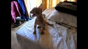 Смях!! Полудяла котка