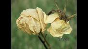 Пиер Мишел - Огнено цвете ( Авторски )