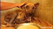 Спасяване на улично куче болно от краста