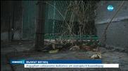 Втори ден издирват младата вълчица в Благоевград