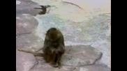 Маймуна И Огледало