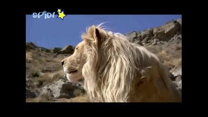 Сладко лъвче