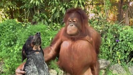 Чудото На Природата Невероятни Животински Приятелства