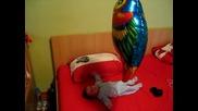 гери папагала