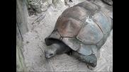 Най - голямата костенурка